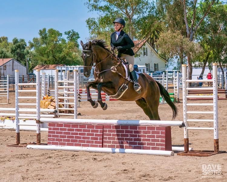 Horses-9.jpg-standard.jpg