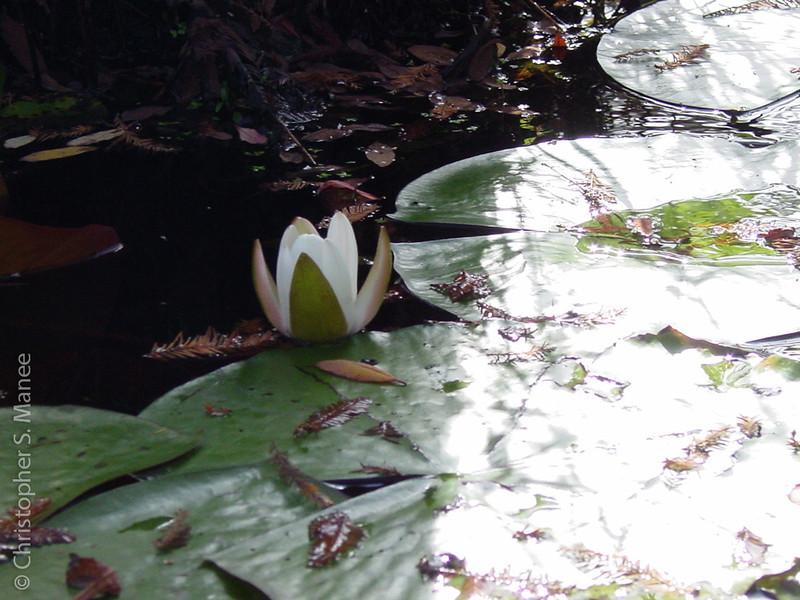 0610_Cypress Gardens029.jpg