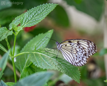 20140628_BUTTERFLY_WORLD (1 of 28)