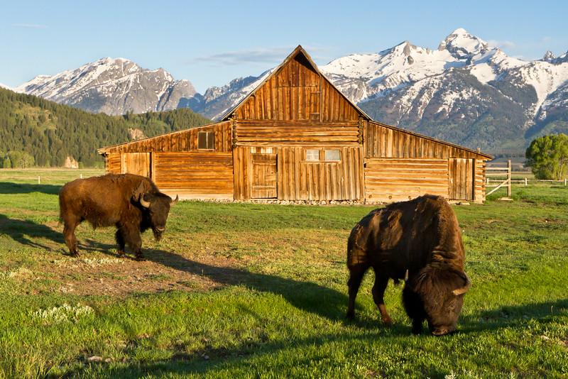 Bison Moulton Barn