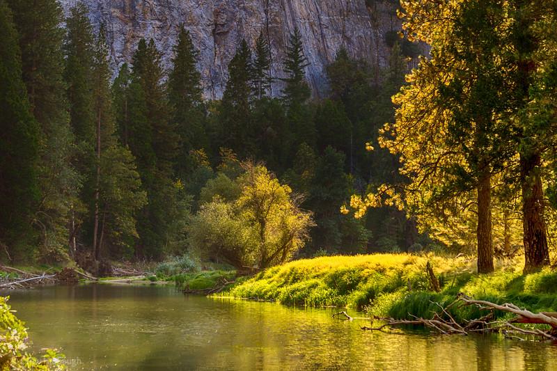 Golden Yosemite Riverbend