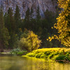 Golden Yosemite Riverbend