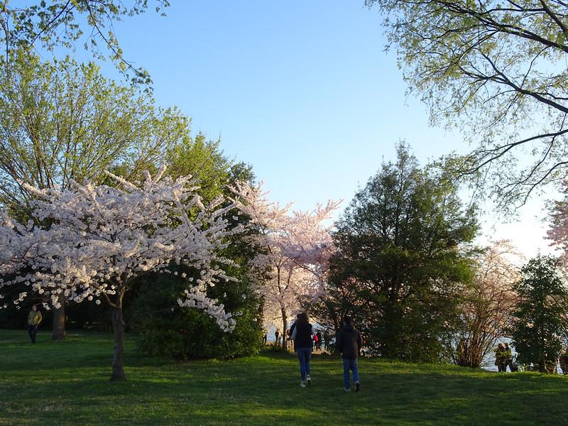 Cherry Blossoms at Sunrise-52.jpg