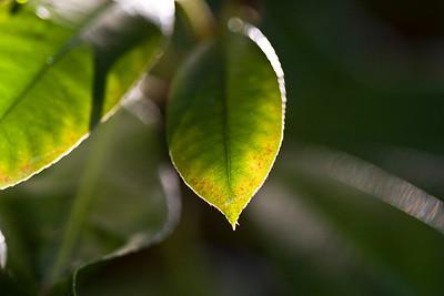 Leaves in Macro