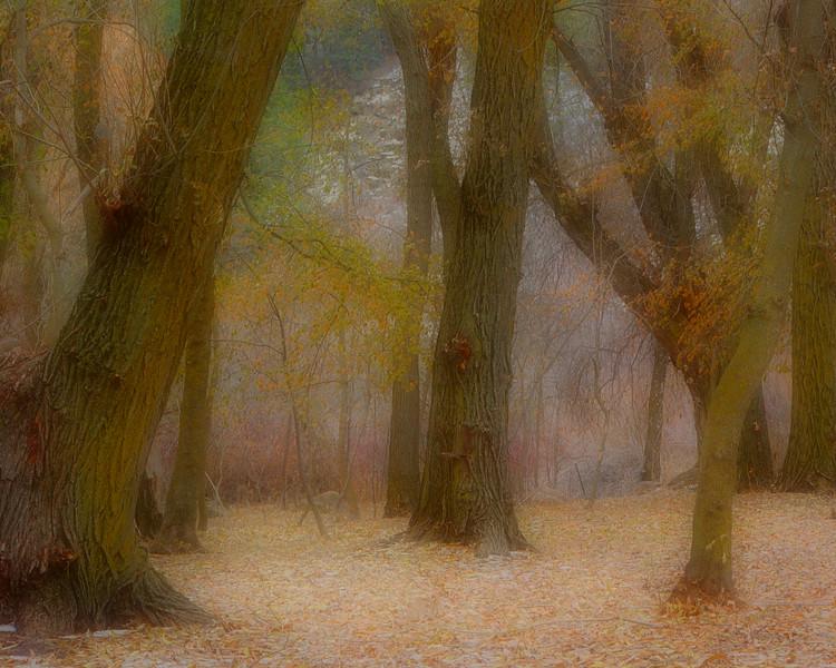 ForestBlur.jpg