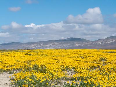 Carrizo Plain - March 2016