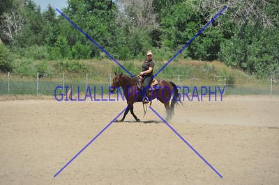 Colorado Stock Horse July 21st 2013