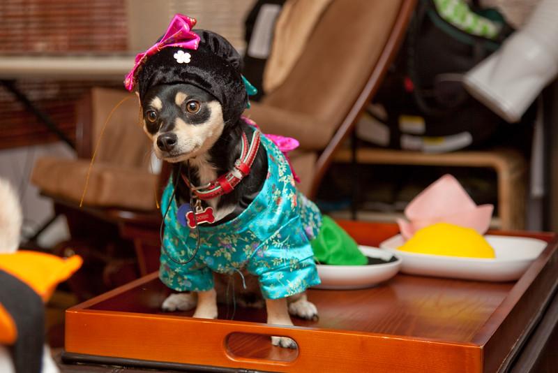 Dog-sushi-halloween-45.jpg
