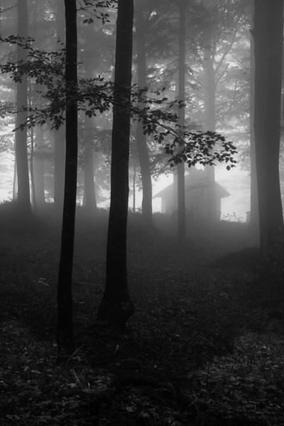 2013-10-Beech wood, Slovenia