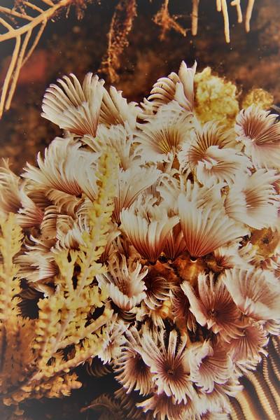 GC MAY18 DaveDietze floral arrangment.jpg