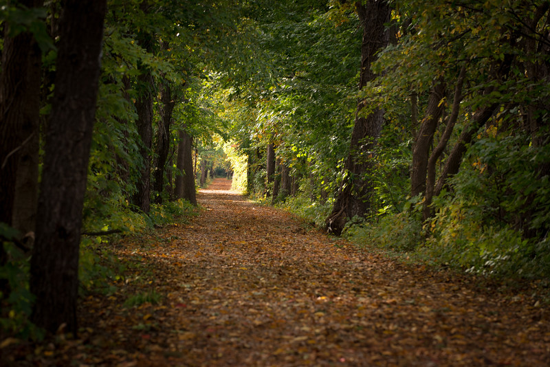 A Walk in the Woods-6039.jpg
