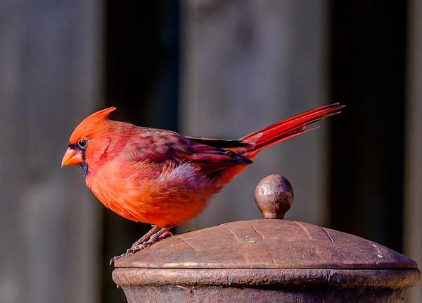 2014-10-11_Birds
