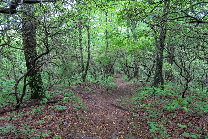 Mountains-to-Sea Trail -- 3,180'