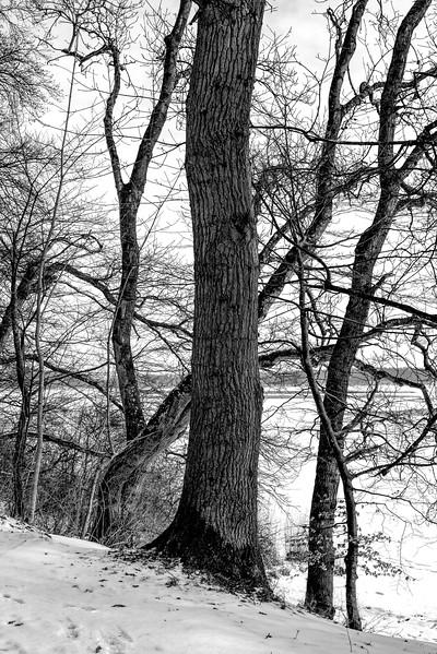 Tree_2640.jpg