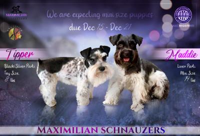 Maddie & Tipper Puppies, DOB 12/21/2020