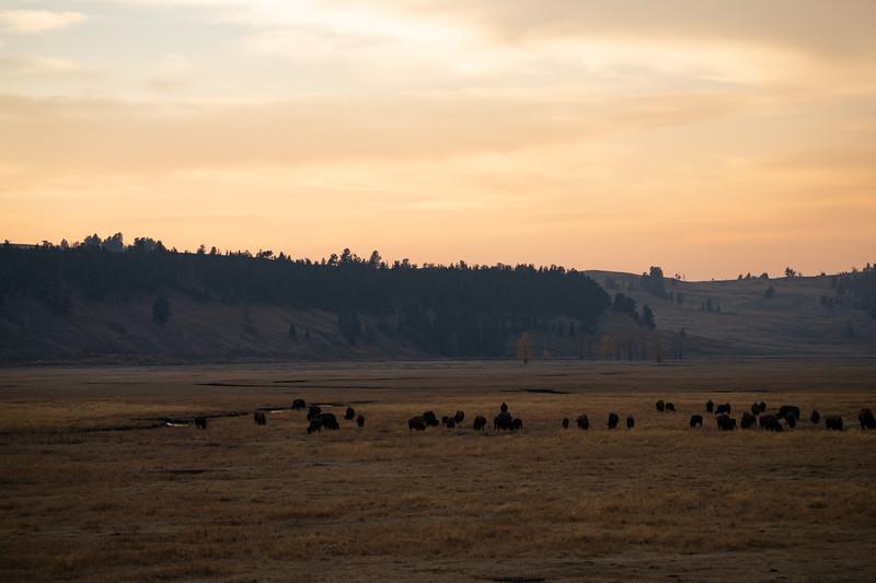 Yellowstone-92.jpg