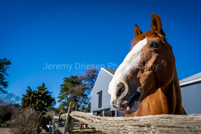 210329_Brian_Dowd_stables-16.jpg