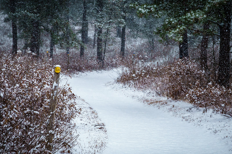 Snowstorm at Albany Pine Bush