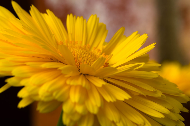 Flower up close