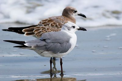 Breach Inlet birds
