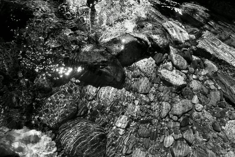 Sequoia_0414.jpg