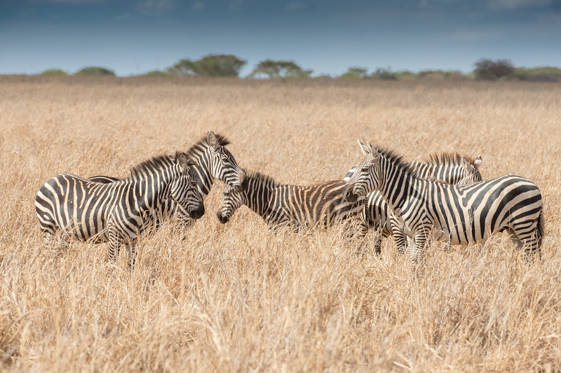 Africa - 102116 - 8187.jpg