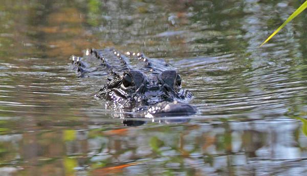 2009 - Everglades, Ryan, Marisa BDay, Plus