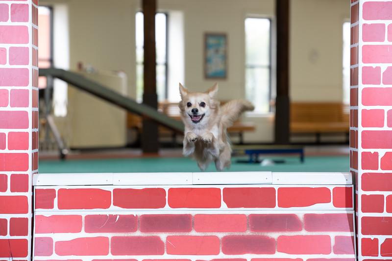 SPCA_Agility-29.jpg