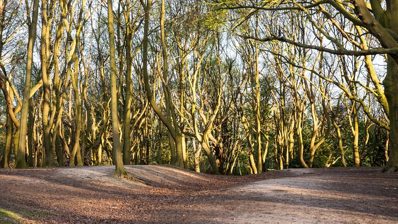 Trees of Hampsted Heath