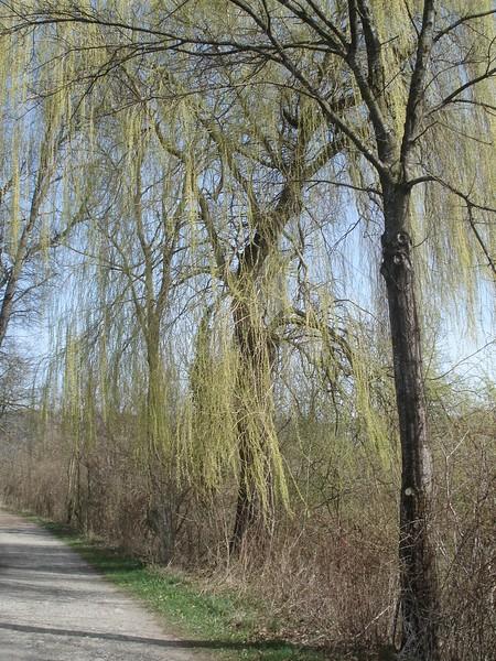 Baumpromenade