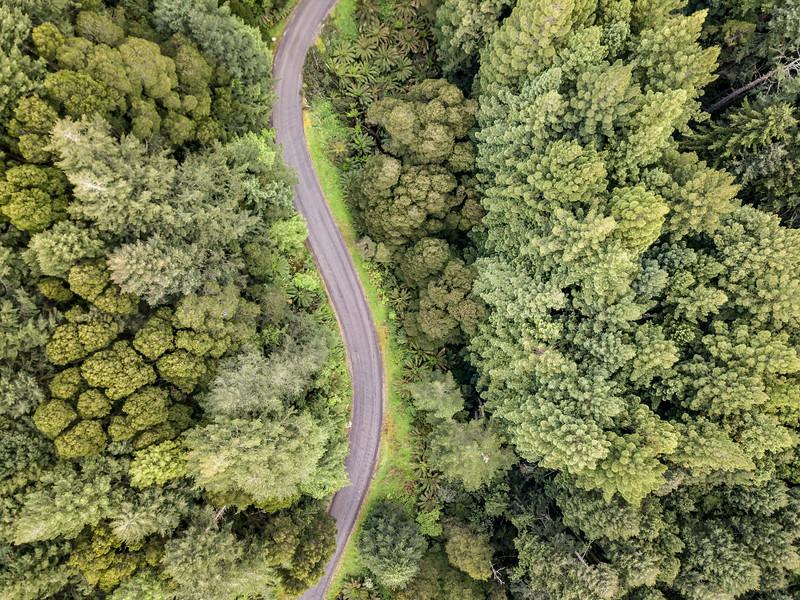 Otway-Ranges-NOV2018-California-Redwoods-6.jpg
