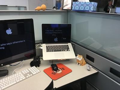 Kitties at Work