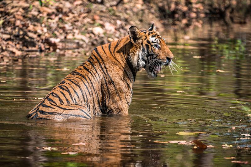 India_April_2019-1111.jpg
