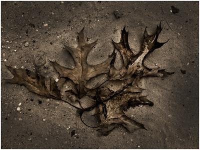 Avalon Leaves by Tom Bessette
