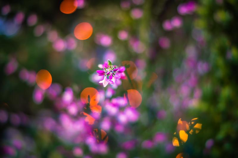 Flower at 50.jpg