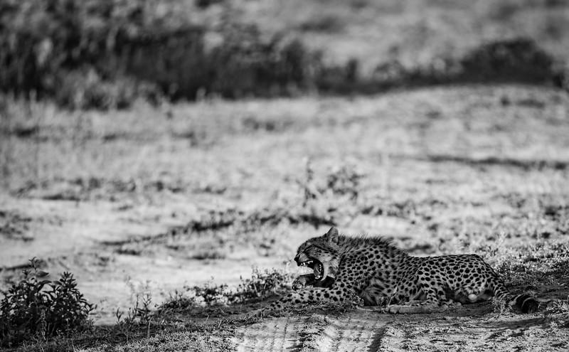 Tanzania_Feb_2018-87.jpg