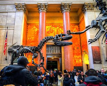 NY Natural History Musuem