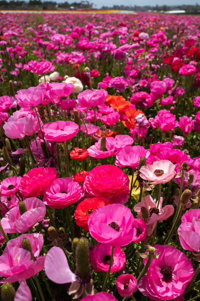 Spring Flowers A-189.jpg