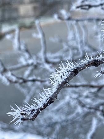 Hoar Frost in West Des Moines April 2020