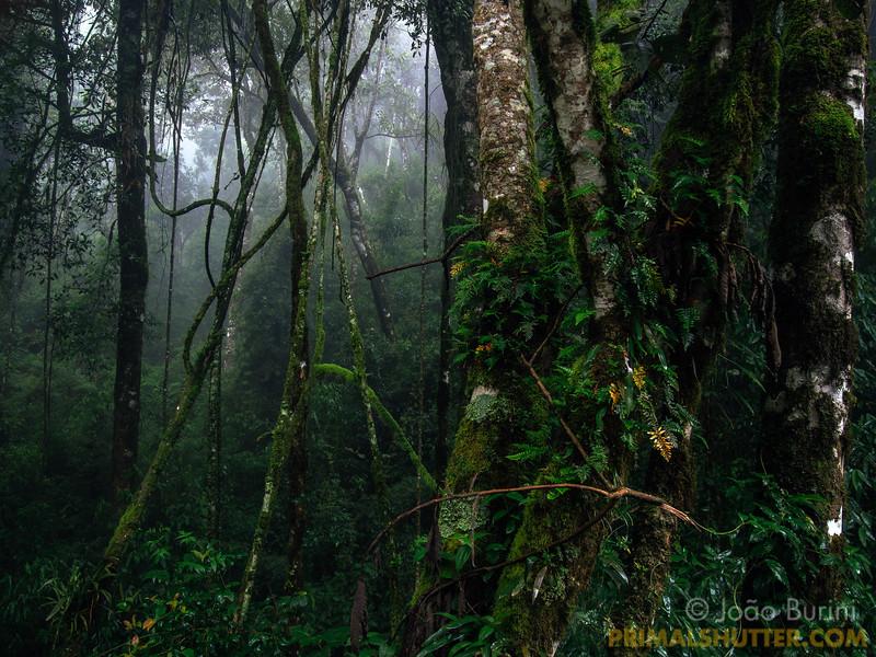 Misty atlantic forest habitat