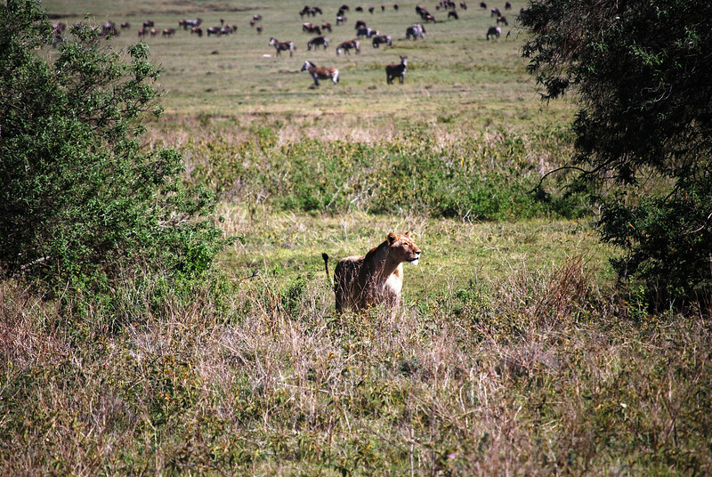 Ngorongoro (88).JPG