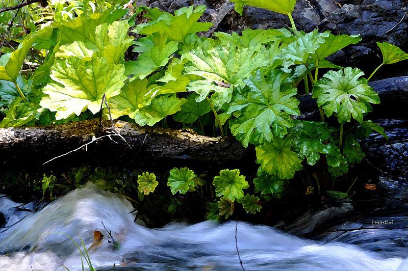 quick water 11-30-2011.jpg