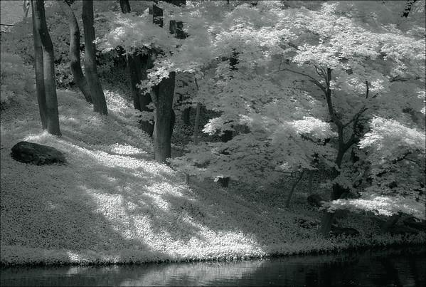 Japanese Gardens 2011