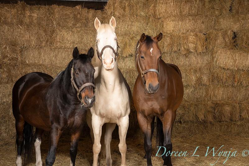 Horse family portrait_126.jpg