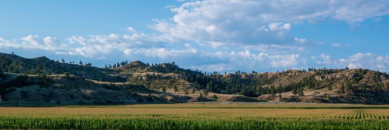 Eastern Montana Corn Farming