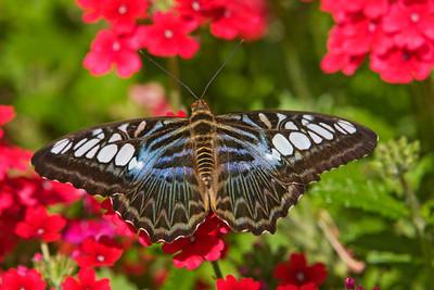 Aug. 8, 2010 - Exotic Butterflies - Como Park