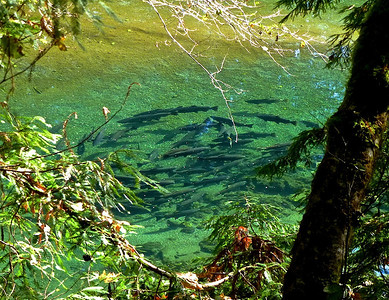 Redwood Creek Backpack