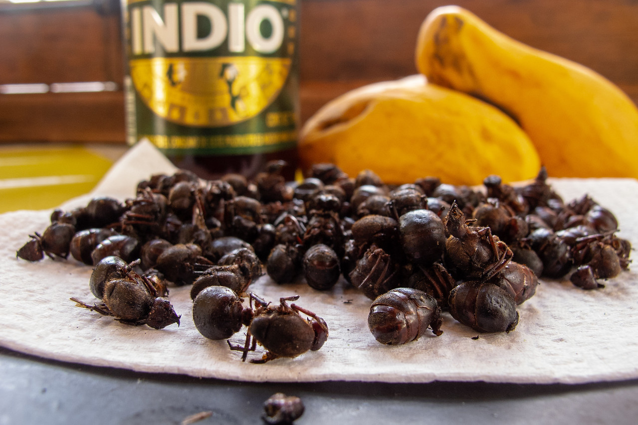 Edible Flying Ants Called Chicatanas
