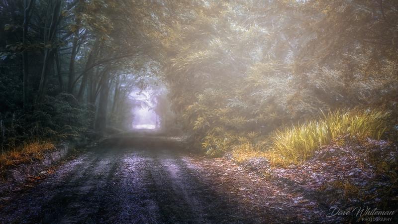Misty Morning at Shipley