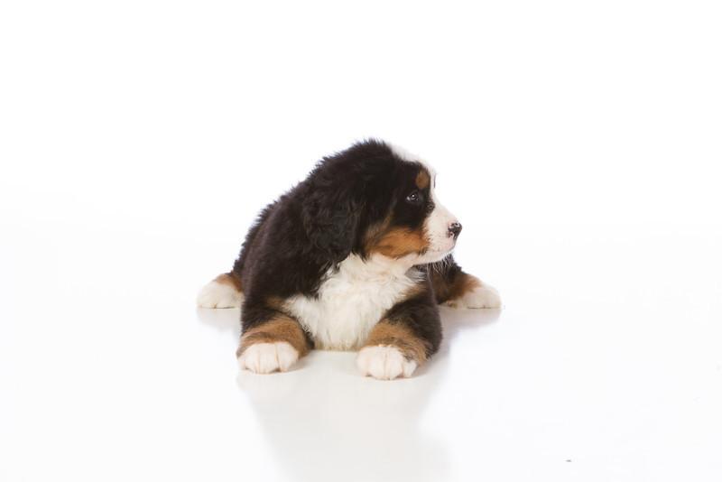2013-Pearson Pups-Jun02-0232.jpg